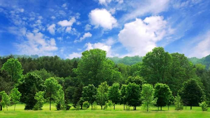 trees-nature