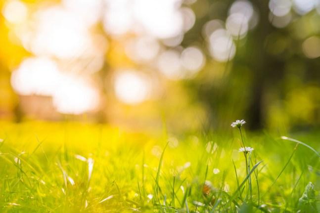 grass-sunlight